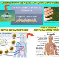 cellmaxx terapi stemcell alami / terapy untuk jantung dan diabetes