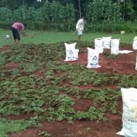 Harga jasa tukang taman murah desain taman minimalis jual tanaman | WIKIPRICE INDONESIA