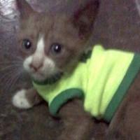 kaos baby hijau untuk kucing kecil umur 1 bulan