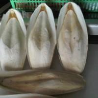 sotong buat burung pemakan biji-bijian sebagai asinan