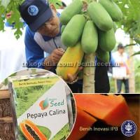 Benih Eceran Pepaya Calina IPB-9
