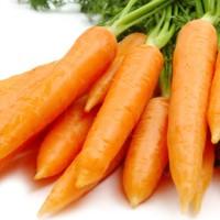 Harga benih wortel isi l k 100   Hargalu.com