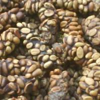 Jual kopi luwak Murah