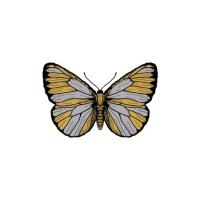 GOLDEN BUTTERFLY - Temporary Tattoo Import