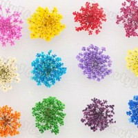 Dried Flower Nail Art/ penghias kuku/ asesoris kuku
