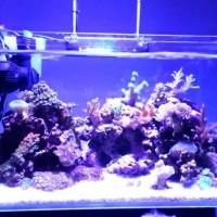 Alat pembuat gelombang ombak dalam aquarium