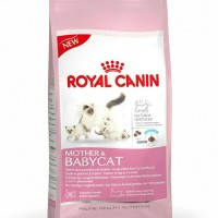 Royal Canin Mother & Baby Cat 34 isi 2kg