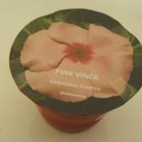 Pink Vinca Gardening Starter