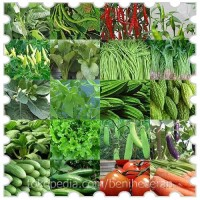 Beragam Benih Sayuran Dengan Harga Eceran