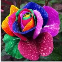 Jual Benih Bibit Biji Bunga Mawar Pelangi / Rainbow Rose Murah