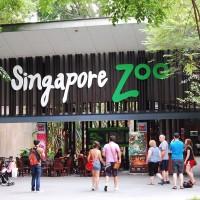 Harga tiket singapore | antitipu.com
