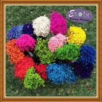 Snowy Flower/eceran/reseller
