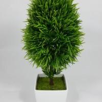 Bonsai Oval Hijau Kecil