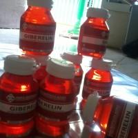 hormon Gibereline