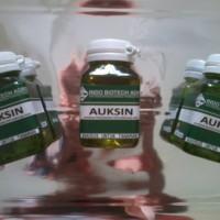 hormon auxin