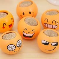 tanaman pot rumput mini emoticon lucu