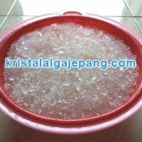 Kristal alga jepang / bibit water kefir 100gram