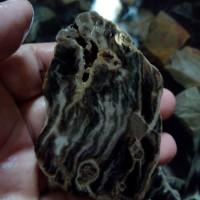 harga Batu Fosil Galih Kelor Hitam Motif Lempengan 1 Cm Per Ons Tokopedia.com
