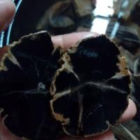 harga Batu Fosil Galih Kelor Hitam Lempengan 1 Cm Per Ons Tokopedia.com