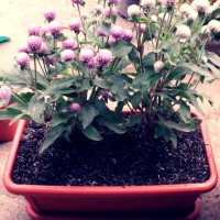 harga Pot Bunga Panjang + Alas Tokopedia.com