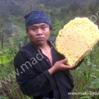 Jual Madu Asli Lebah Liar Hutan Baduy, Banten. Kemasan Jerigen 1200ml. Murah