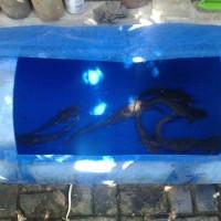 Drum Plastik Kolam Ikan