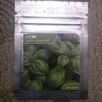 Benih Daun Kemangi Basil Italian Large Leaf utk Hidroponik
