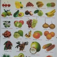 Mainan Poster Edukasi Aneka Buah-buahan / Fruits