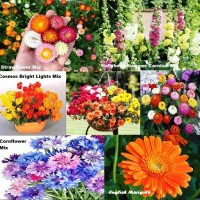 Paket hemat benih bunga musim panas Zinnia, Dahlia, Hollyock