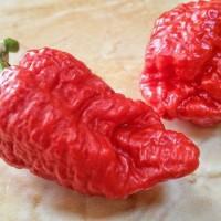 Benih / Bibit / Biji - Cabai Genghis Khan's Brain Pepper Seeds