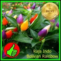 Biji Benih Seed Cabe Cabai Hias Bolivian Rainbow Pepper Cabai Pelangi