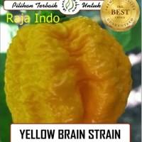 Biji Benih Seed Cabe Cabai Hias Yellow Brain Strain Pepper Cabai Indah