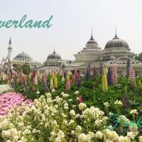 Tiket Everland South Korea Termurah Anak