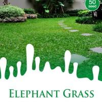 1 Pack Biji Tanaman Rumput Gajah Maica Leaf 50's Seeds