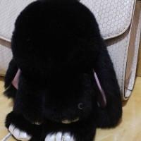 Furball Rabbit (import)