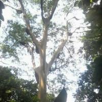 Harga tokcer madu lebah liar murni 100 asli dari hutan ja   Pembandingharga.com