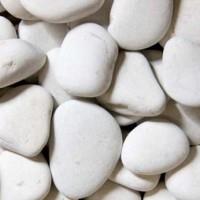 harga Batu Hias /Dekorasi Dasar Akuarium Coral Koral Putih Tokopedia.com