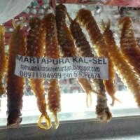herbal tangkur buaya
