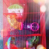 Kandang Hamster Kucing Kelinci Landak Burung