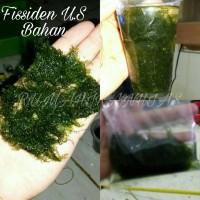 tanaman aquascape moss fissiden us