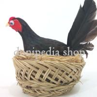 Boneka / Miniatur Ayam Betina Mengeram Telur ~ Pajangan / Kado Unik