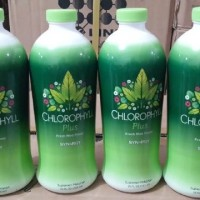 SYNERGY LIQUID CHLOROPHYLL PLUS KhLOROFIL klorofil isi 730ML