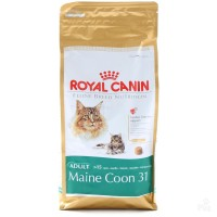 Royal canin Adult Maine Coon 31 4kg