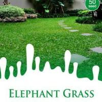 1 Pack Biji Tanaman Rumput Gajah Mini (Elephant Grass)