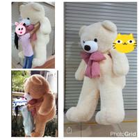 Jual boneka teddy bear beruang super besar super giant 2 meter Murah