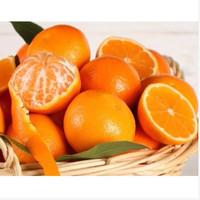 Bibit Benih Biji Buah Jeruk Mandarin Orange Import 50 butir
