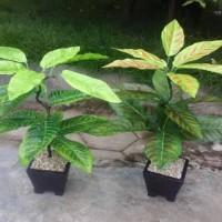 Jual Pohon artificial mini / Pohon Plastik / Bunga hias Murah