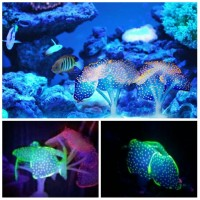 Coral glow in the dark batu karang hiasan aquarium dekorasi aquascape