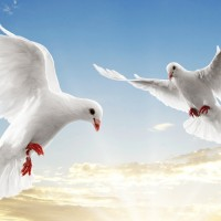 harga Repro Gambar Lukisan Burung Merpati Doves Pretty Painting Love Birds Tokopedia.com