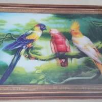 Lukisan Foto Gambar Burung 3 dimensi